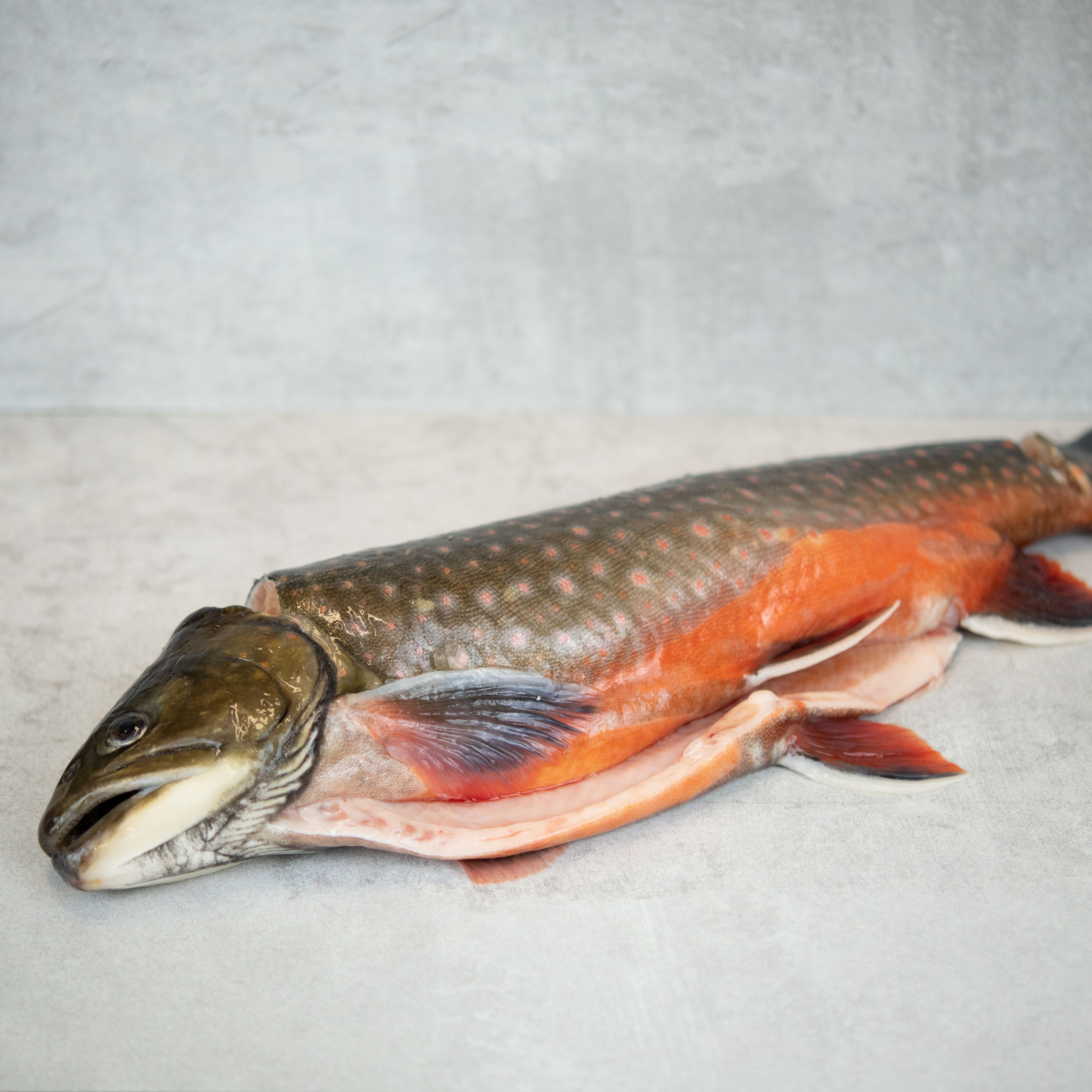 Seesaibling_Markthalle20_Ikejime_Fisch_Müritzfischer